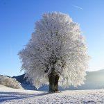 Winterimpressie